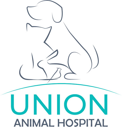 Union Animal Hospital and Affordable Pet Dental Plus | 3613 E Springfield Ave, Spokane, WA, 99202 | +1 (509) 535-4903